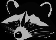 racoon-1296640_1280